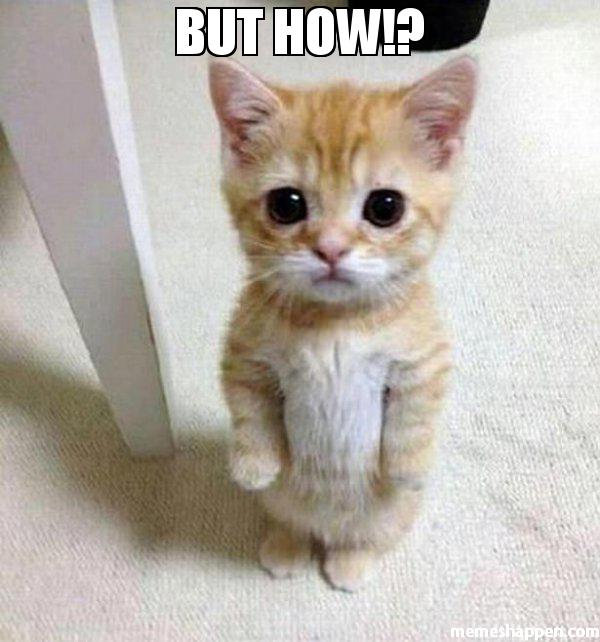 "a kitten looking cute and sad staring at you with the text above it that says: ""BUT HOW?"""